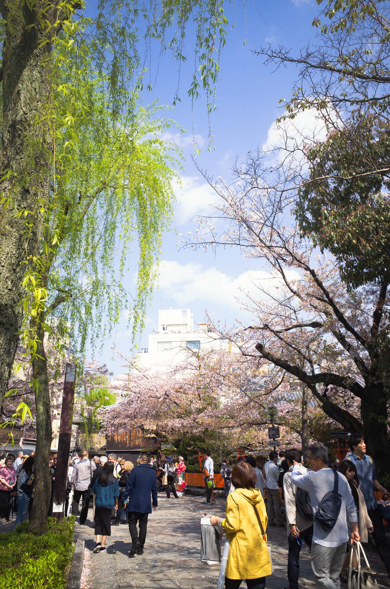 祇園 旅行 おすすめ