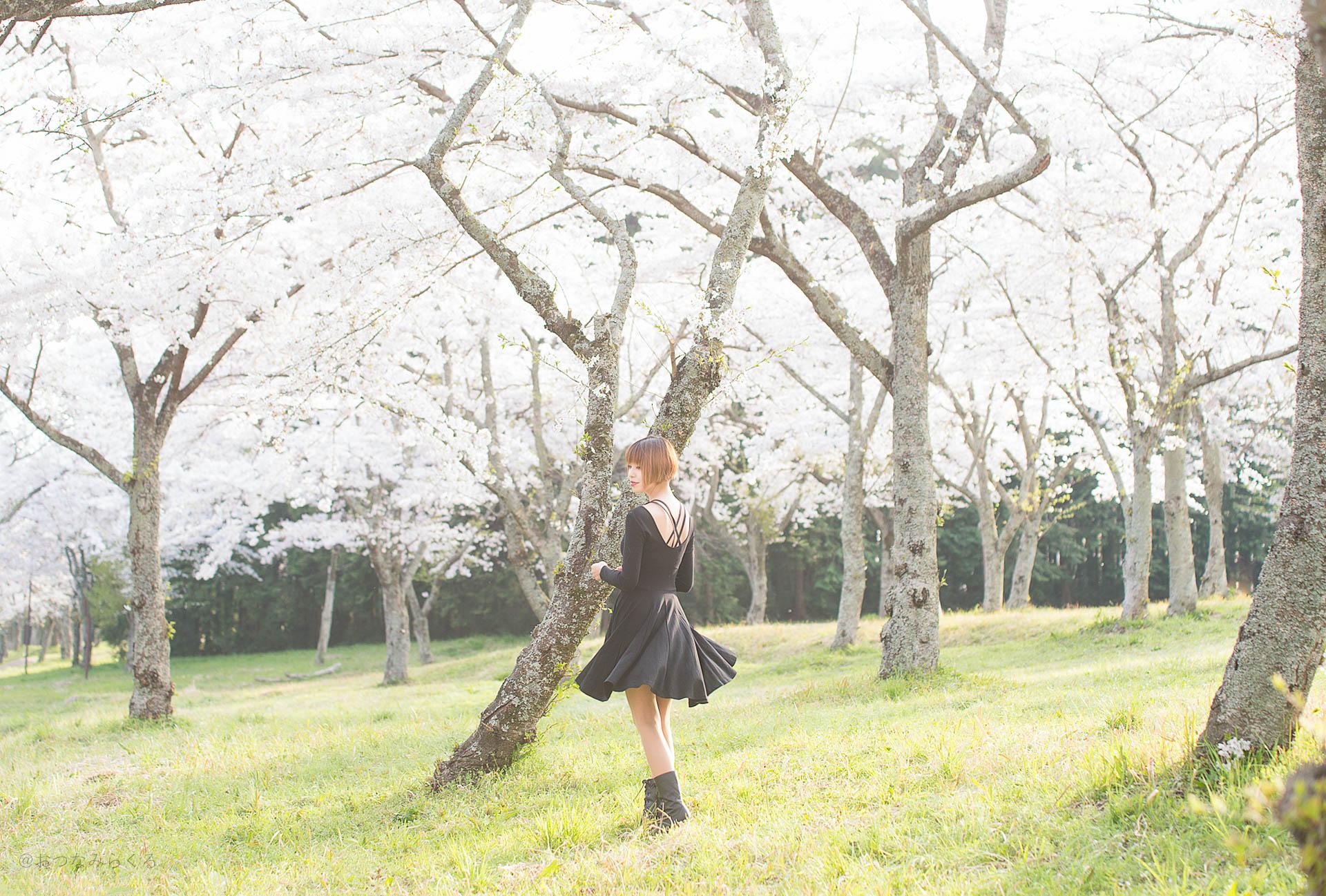 【うずら春の桜まつり】今年で2度目となる桜撮影。どんな写真が撮れるかな♪