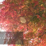 【河口湖遠征2日目】平成最後の秋は富士山で撮影してきた☆彡【うずらフォト】