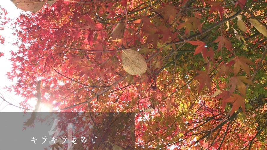 富士山 秋 紅葉