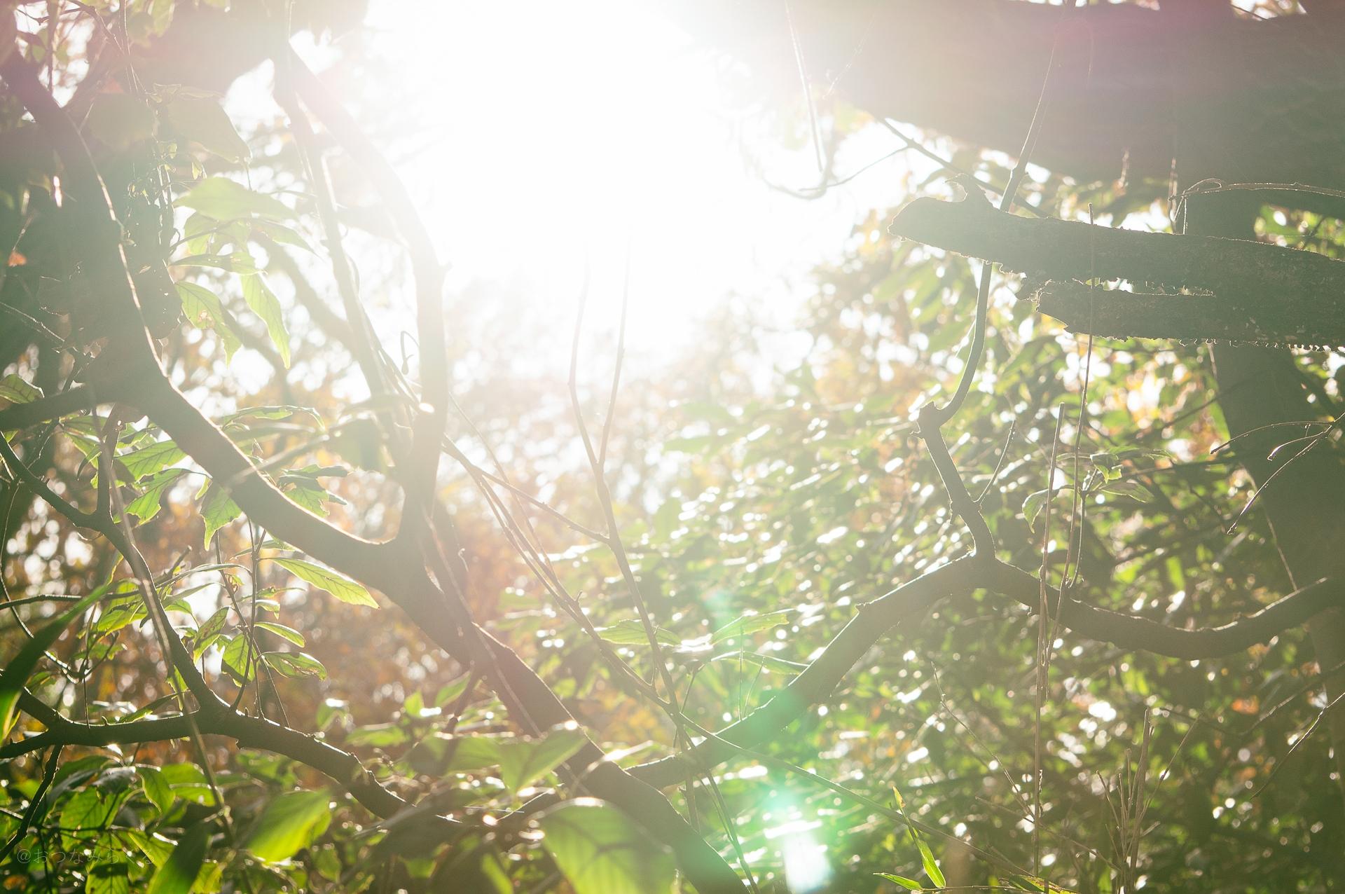 スナップ 向ヶ丘遊園 自然