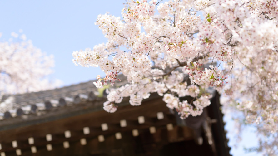 春 桜 日本