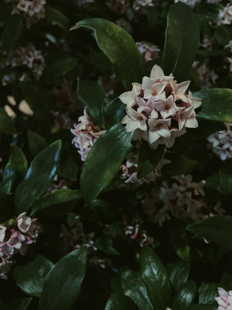 散歩 夜 植物